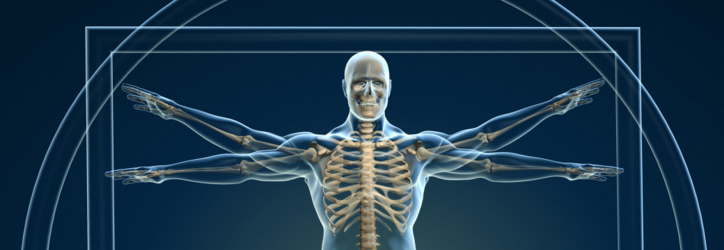 Body and skeleton in vitruvian man - this is a 3d render illustration