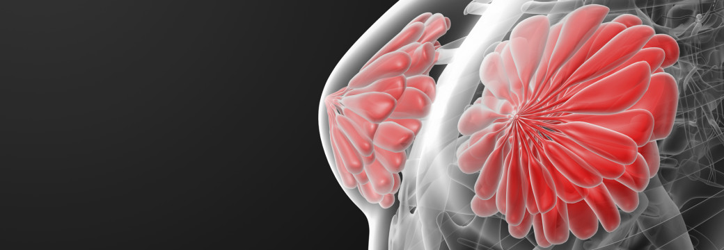 3d render female breast anatomy x-ray - close-up